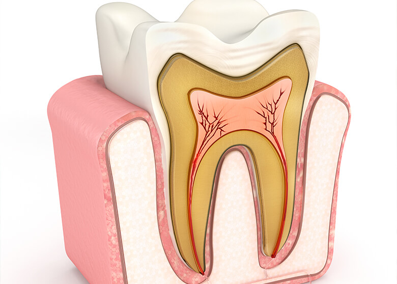 illustration depicting what the interior of a tooth looks like
